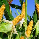Agricultura romaneasca, evolutie remarcanta in ultimii ani