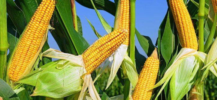Agricultura românească, evoluţie remarcantă în ultimii ani